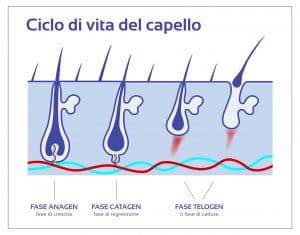 ciclo vita capello